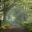 Countryside track in early morning sunlight by Sue Robinson