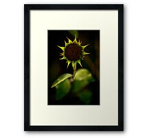 Roses are red, Violets are blue, Sunflowers are yellow. Framed Print