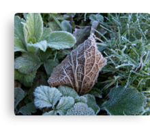 Frost and Coloured Leaves texture Canvas Print