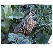 Frost and Coloured Leaves texture Poster
