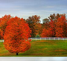 """"""" Fall Fenced In """" by canonman99"""