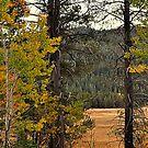 """""""Mountain Meadow"""" by Lynn Bawden"""