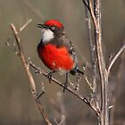 Chirpy Chirpy Chat Chap by Phillip Weyers