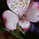 Exotic Flower by Tiffany Vest