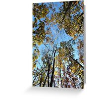 Autumn Trees, New York Greeting Card