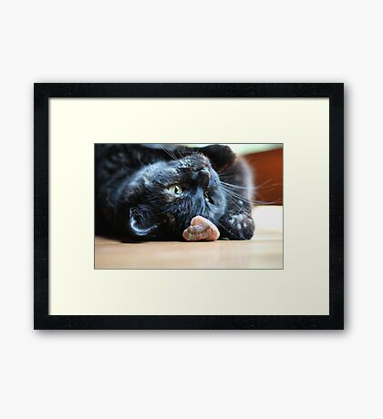 Playing Cat Framed Print