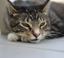 Tired Cat by CAPhotography