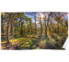 HDR forest Poster