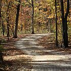 Winding Gravel Road by CAPhotography