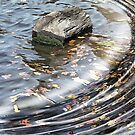 Logging in on Ripples by Monnie Ryan
