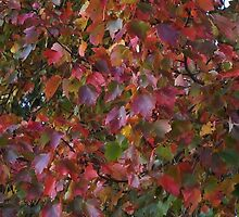 Foliage Immersion by RVogler