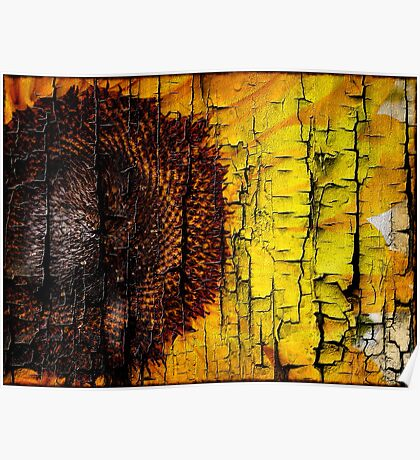 Sunflower on Wood Poster