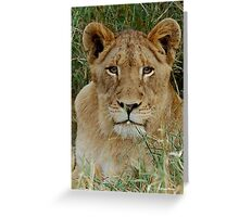 IF LOOKS COULD KILL - THE LION – Panthera leo Greeting Card