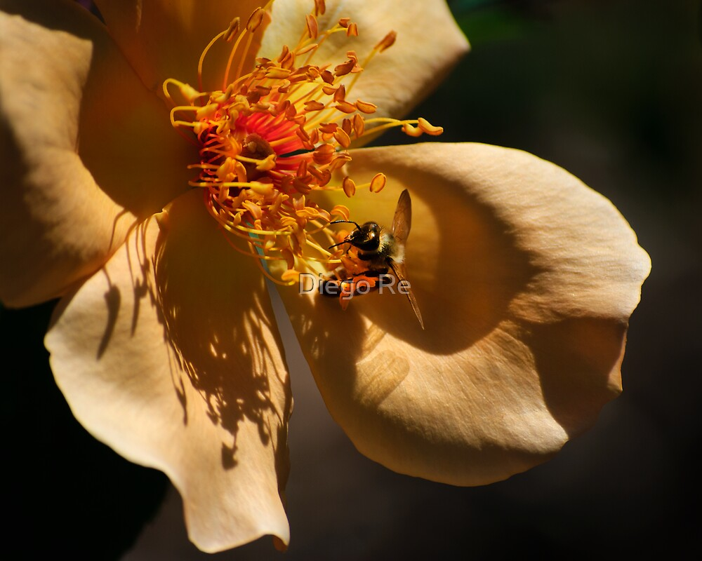 Bee Love by Diego Re