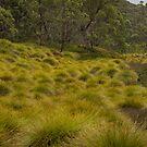 more Button Grass by Rosie Appleton