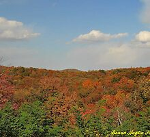 Beautiful Autumn Day by Donna Anglin Husband
