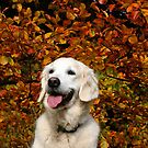 Happy autumn! by Trine