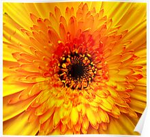 """""""Yellow Floral Detail"""" Poster"""