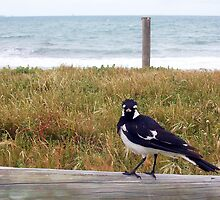 Beach Bird Eleven - 14 10 12 by Robert Phillips