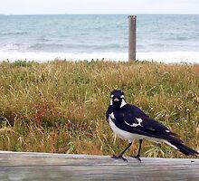 Beach Bird Eleven - 14 10 12 by Robert Phillips