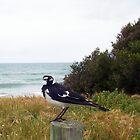 Beach Bird Ten - 14 10 12 by Robert Phillips