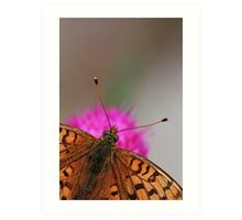 Lesser Spotted Fritillary butterfly  Art Print