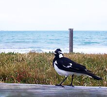 Beach Bird Seven - 14 10 12 by Robert Phillips