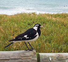 Beach Bird Four - 14 10 12 by Robert Phillips
