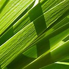 Green leafs by wildrain