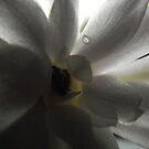 Cactas Bloom by debsphotos