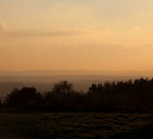 Ashdown Forest Evening by Sue Robinson