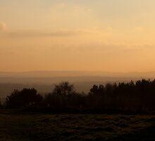 Ashdown Forest Evening by Sue Robinson