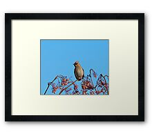 Bohemian Waxwing Framed Print