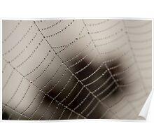 Cobweb Dew Poster