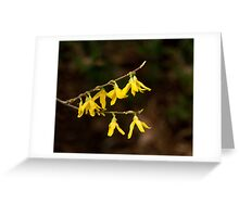 Forsythia Yellow Flowers Greeting Card
