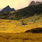 Tasmania, Cradle Mt Landscape by photoj