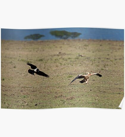 Tawny Eagle and Pied Crow Poster