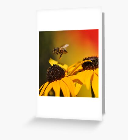 Takeoff ~ Greeting Card