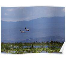 Pelicans flying over Lake Naivasha Poster
