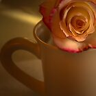 ROSE IN CUP by pjm286