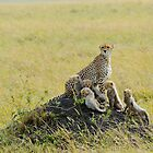 mother cheetah and five babies by nicolemarie72