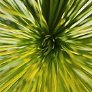 Xanthorrhoea by Peter Gray