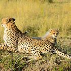cheetah and baby by nicolemarie72