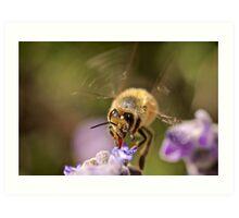 Honey Time Art Print
