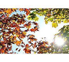 Autumn Leaves with Sunflare Photographic Print