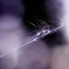 Seeds on a web line by marina63