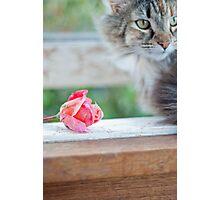 Spring Kitty Photographic Print