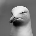 Seagull by Colin Shepherd