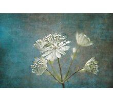 Angelic Photographic Print