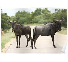 Blue wildebeest  Poster
